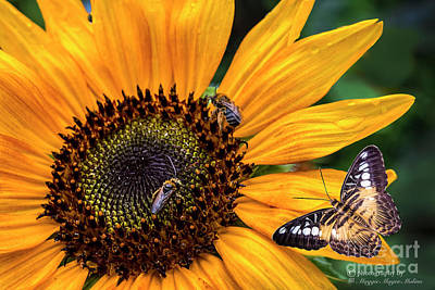 Digital Art - Busy Sunflower by Maggie Magee Molino