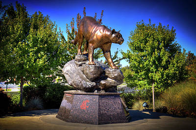 Photograph - Butch - Cougar Pride Sculpture by David Patterson