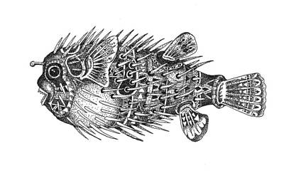 Porcupine Fish Drawing - Buteteng Laot 1  Porcupine Fish 1 by Zeus Paredes