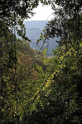 Photograph - Butte Creek Canyon October by Michele Myers