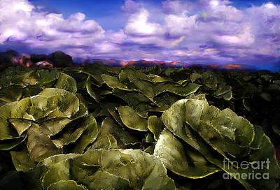 Digital Art - Butter Lettuce In Yuma by Lisa Redfern