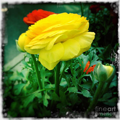 Photograph - Butter Yellow Spring - Flowers Of New York by Miriam Danar
