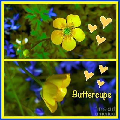 Photograph - Buttercup Collage by Joan-Violet Stretch