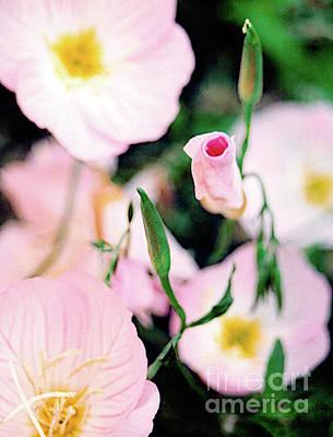 Photograph - Buttercup Flower by Vizual Studio