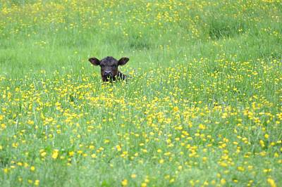 Photograph - Buttercup by JD Grimes