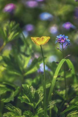 Buttercup Photograph - Buttercup Portrait by Chris Fletcher