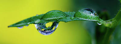 Photograph - Buttercup Rain Drop by Crystal Wightman