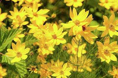 Photograph - Yellow Wildflowers by Colleen Keller Breuning
