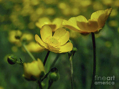 Photograph - Buttercups Field 2 by Kim Tran
