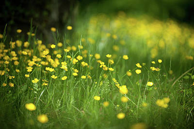 Photograph - Buttercups by John Whitmarsh