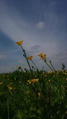 Photograph - Buttercups by YoursByShores Isabella Shores