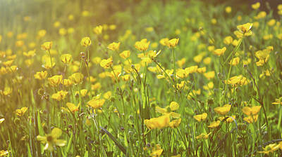 Abstract Flowers Royalty-Free and Rights-Managed Images - Buttercups by Martin Newman