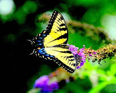 Butterflie Art Print by Aron Chervin