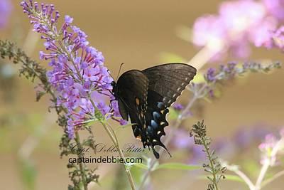 Photograph - Butterflies 8587 by Captain Debbie Ritter