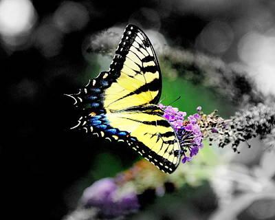 Butterflies Original
