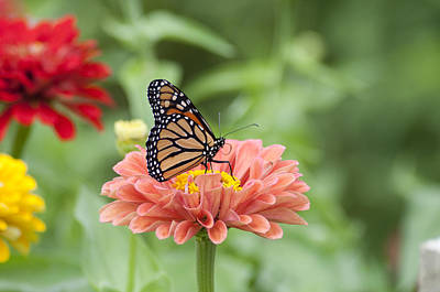Butterflies And Blossoms Art Print by Bill Cannon