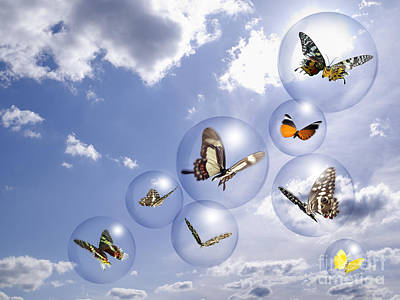 Butterflies And Bubbles Art Print