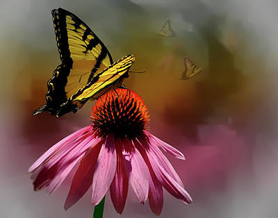 Photograph - Butterflies And Cone Sflowers by Judy Johnson