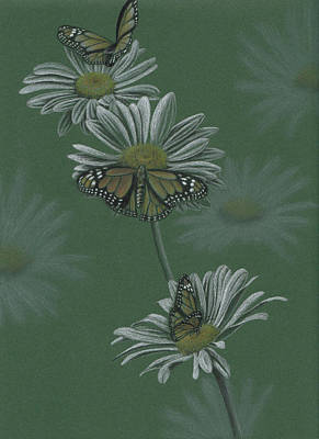 Daisy Drawing - Butterflies And Daisies by Tiffany Gardiner