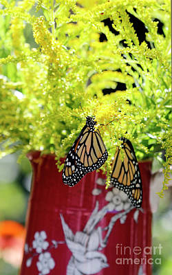 Photograph - Butterflies And Goldenrod Flowers by Luana K Perez