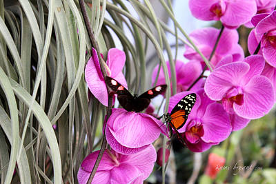 Butterflies And Orchids Art Print