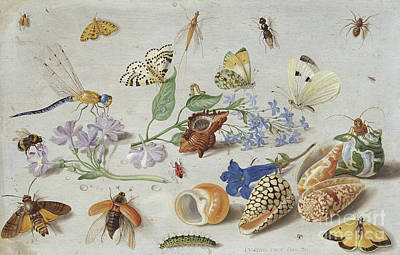Nature Study Painting - Butterflies And Other Insects, 1661 by Jan Van Kessel