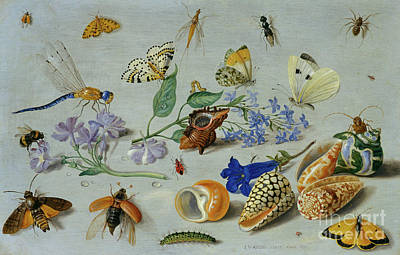 Nature Study Painting - Butterflies And Other Insects by Jan Van Kessel