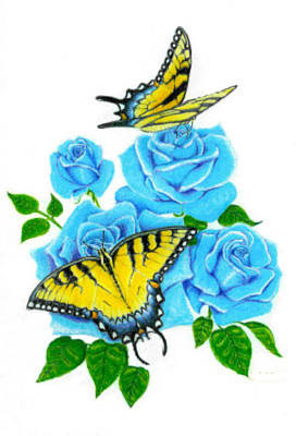 Blue Swallowtail Drawing - Butterflies And Roses by Lori White