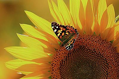 Photograph - Butterflies And Sunflowers Go Together by Karen McKenzie McAdoo