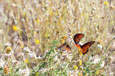 Photograph - Butterflies And Wildflowers by SR Green