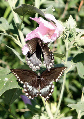 Butterflies Are Free 3 Art Print