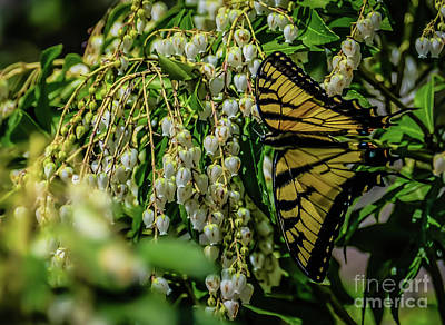 Photograph - Butterflies Are Free by Elijah Knight