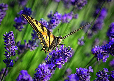 Photograph - Butterflies Are Free by Randy Hall
