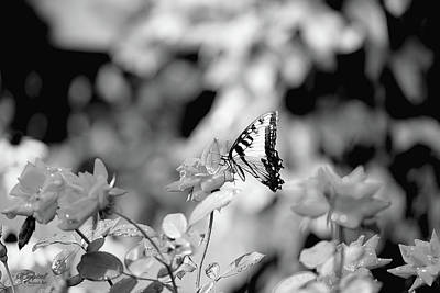 Photograph - Butterflies Are Free by Theresa Campbell