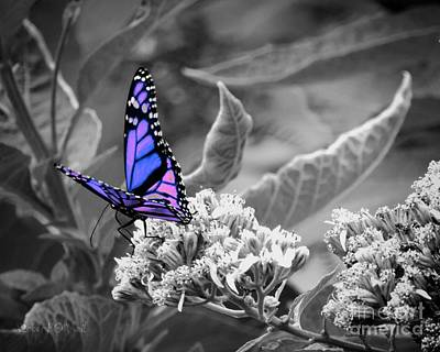 Photograph - Butterflies Are Free To Fly 002 by Robert ONeil
