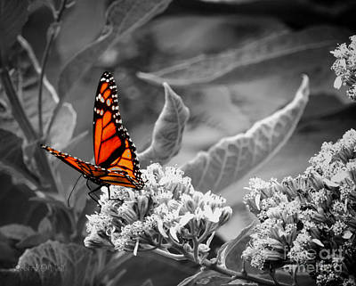 Photograph - Butterflies Are Free To Fly by Robert ONeil