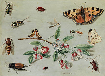 Grasshopper Painting - Butterflies, Beetles, Caterpillar And Flowers by Jan van Kessel