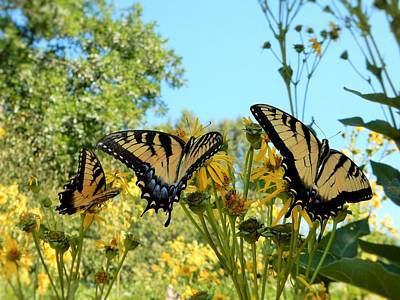 Gaston County Photograph - Butterflies by Brian McGary