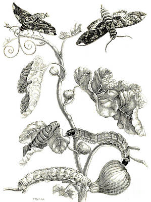 Butterflies, Caterpillars And Plant Art Print