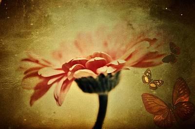 Gerber Daisy Photograph - Butterflies by Cathie Tyler