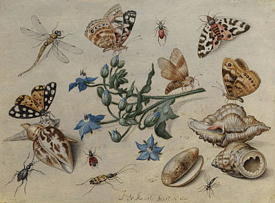 Grasshopper Painting - Butterflies, Clams, Insects And Flowers by Jan van Kessel