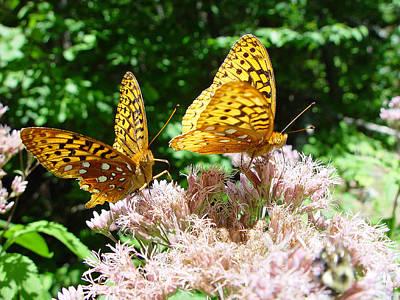 Butterflies Art Print by Eric Workman