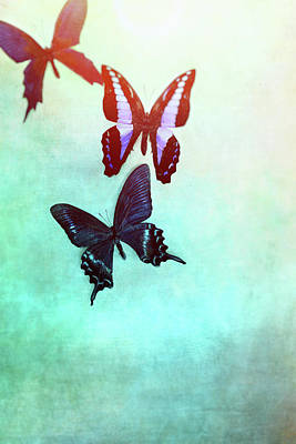 Photograph - Butterflies Fading by Stephanie Frey