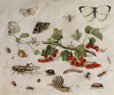 Grasshopper Painting -  Butterflies, Insects And Currants by Jan van Kessel