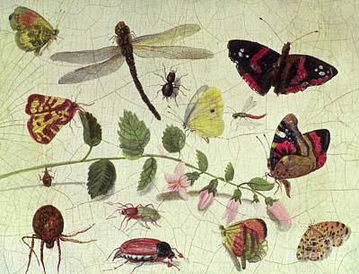 Nature Study Painting - Butterflies, Insects And Flowers by Jan Van Kessel