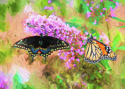 Photograph - Butterflies by John Freidenberg