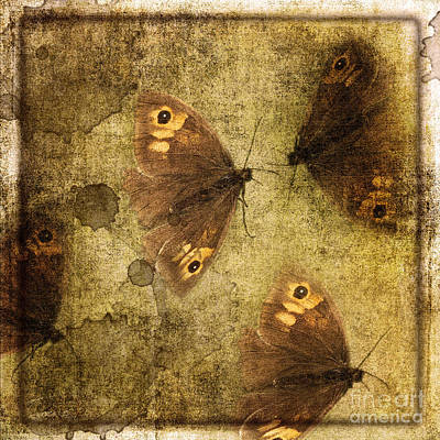 Photograph - Butterflies by Liz Alderdice