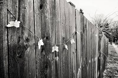Butterflies On A Rustic Fence Art Print