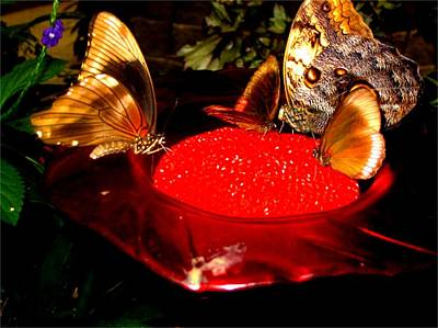 Photograph - Butterflies On An Orange by Colette Merrill