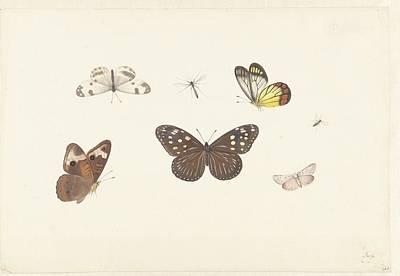 Butterflies Art Print by Pieter Withoos